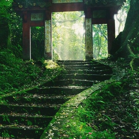 Overgrown steps leading to an old Japanese shrine gate