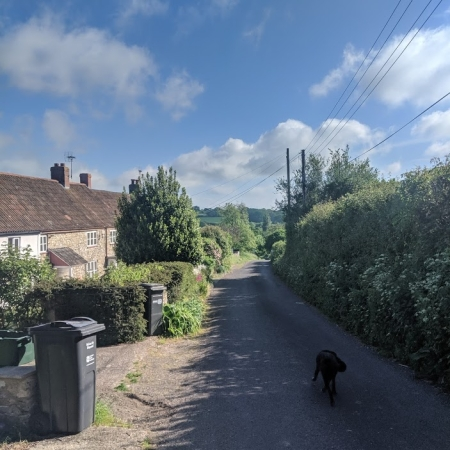 Dog in a country lane in Somerset