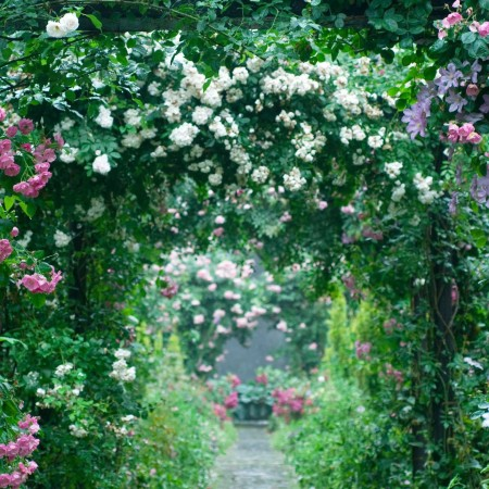 Stone path leading through archways of roses