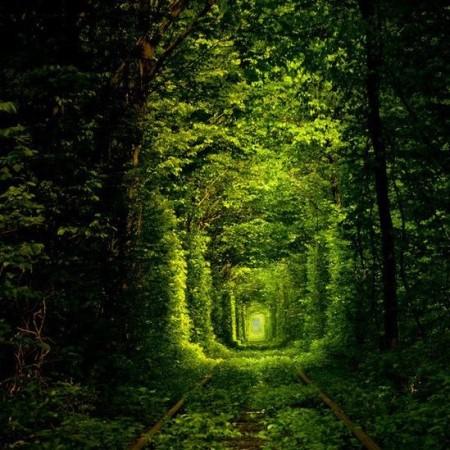 Rail tree tunnel Kleven Ukraine by besttravelphotos