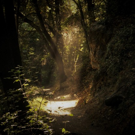 forest path with sunray by iva-rajovic-JvPpg6-ZoPc-unsplash