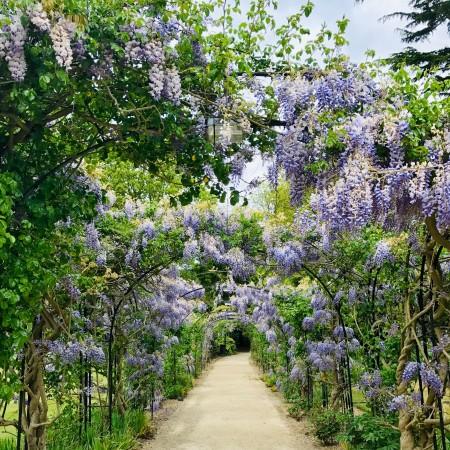 wisteria-hung pathway by carlita-benazito-vnd50_tpkqg-unsplash