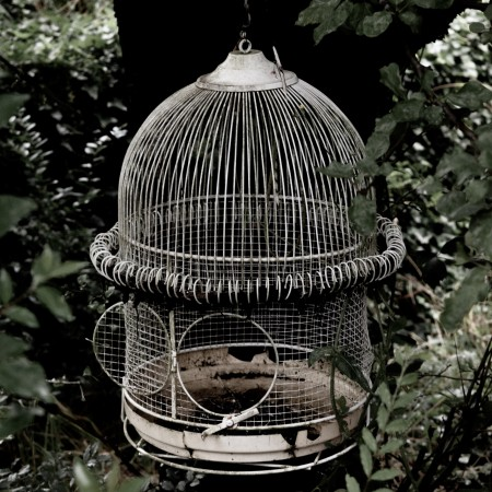 wire bird cage with the door open by deleece-cook-Vct2D4rZfmc-unsplash